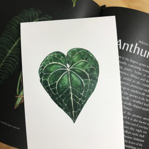 Ilustración botánica en acuarela